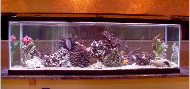 Third_Aquarium
